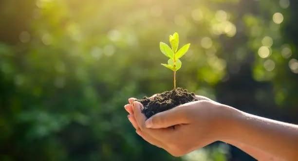 ecofworld - planting a tree