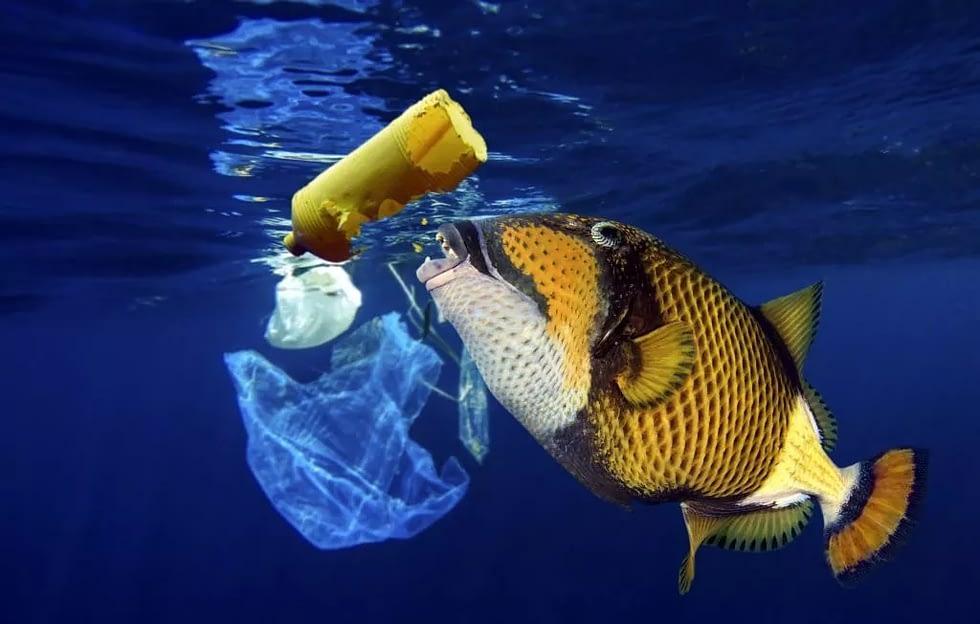ecofworld.com - use reusable straws, get rid of plastic straws!